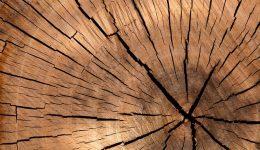 fakty i mity o drewnie